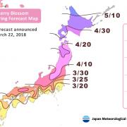 Hanami festival. Cherry blossom forecast.